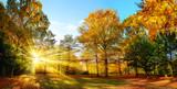 Fototapety Idyllischer Naturpark im Herbst bei Sonnenschein