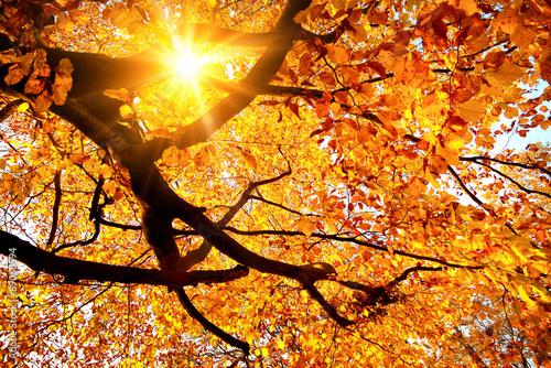 Zdjęcia na płótnie, fototapety na wymiar, obrazy na ścianę : Sun shining in the golden autumn