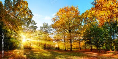 Poster Idyllischer Naturpark im Herbst bei Sonnenschein