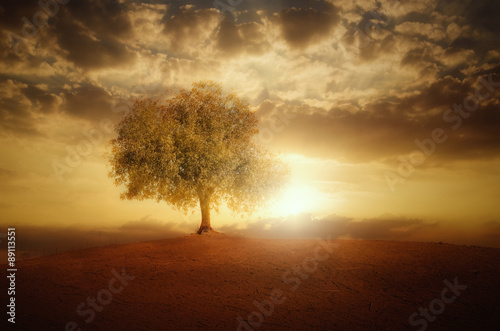 Single Tree at sunset Poster