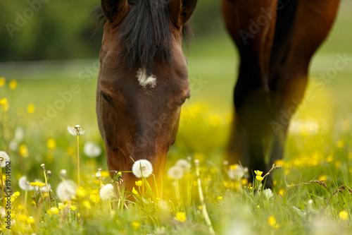 Poster Grasendes Pferd
