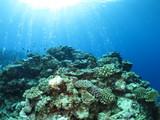 沖縄離島ダイビング サンゴが美しい海中の絶景 久米島