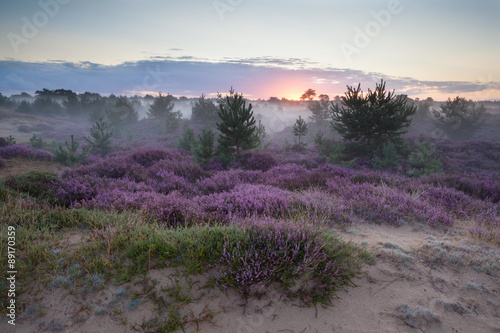 misty sunrise on sand dunes with heather flowers - 89170359