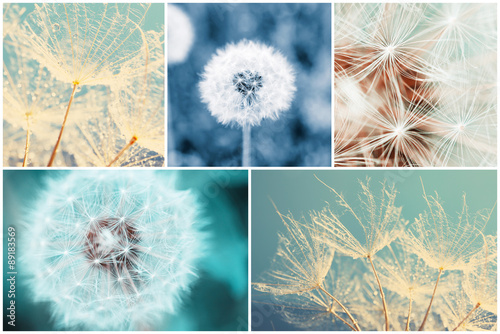 Naklejka Beautiful nature collage with dandelion flowers