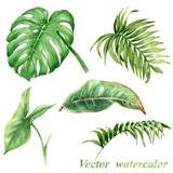 Fototapety Set of watercolor tropical plants  leaves isolated on white.