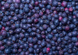 shadberry