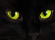 Black cat looks at you with bright green eyes