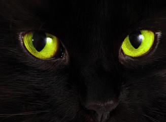 Czarny kot patrzy na Ciebie z zielonymi oczami