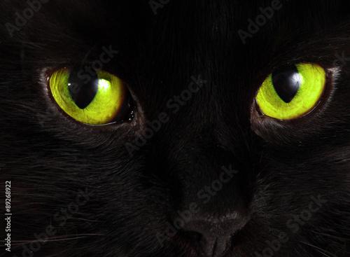 wzrok-czarnego-kota,-jasnozielone-oczy