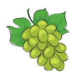 Grapes Sketchy Colored Vector Icon