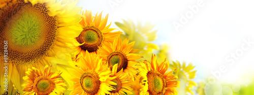 In de dag Bloemen słoneczniki w słońcu