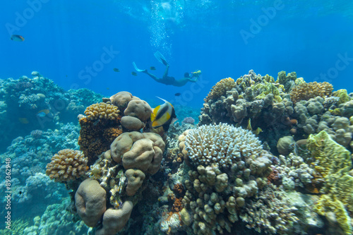 Poster Underwater coral reef with cameraman