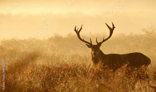 Fotobehang Ree Red deer stag silhouette in the mist