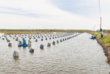 Aquacultural farm for oysters poster