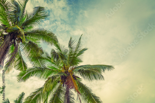 Fototapeta Coconut palm trees ( Filtered image processed vintage effect. )