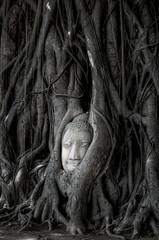 Head of Buddha statue in Banyan Tree with black and white tone, © Mybona