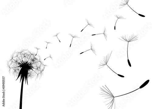 Fototapeta Blow Dandelion on white background
