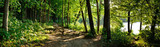 trail in the forest - Fine Art prints
