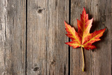 Fototapety Autumn maple leaf over wooden background