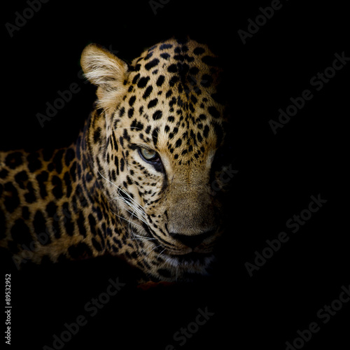 Fotobehang Luipaard Leopard portrait isolate on black background