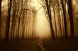 road through golden forest in autumn