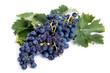 Grappolo d'uva nera isolato su sfondo bianco - 89576973