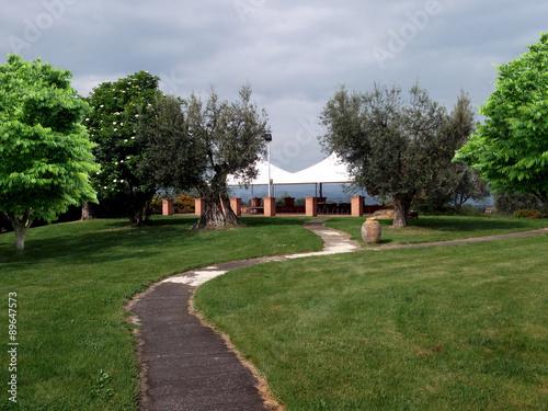 Canvas Olijfboom Parco con olivi