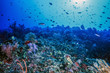 Underwater coral wall Fiji
