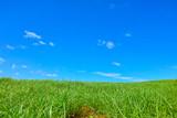 Fototapety 草原と青空