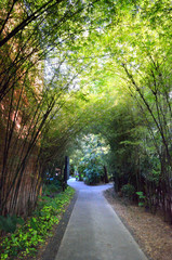 A path with dense bamboo groves on both sides.. © Chee-Onn Leong