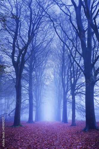 sciezka-w-ciemnym-i-mglowym-lesie-w-holandiach