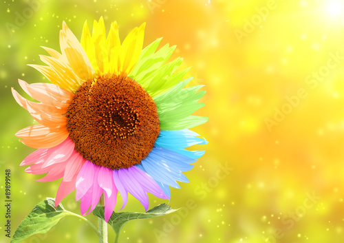 Poster Sunflower with petals painted in different colors