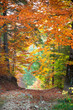 Autumn landscape, Tunnel from colorful trees growing and footpat