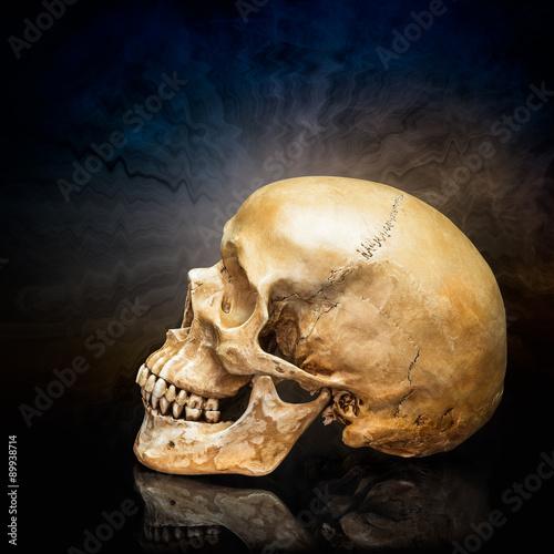 Poster Human skull