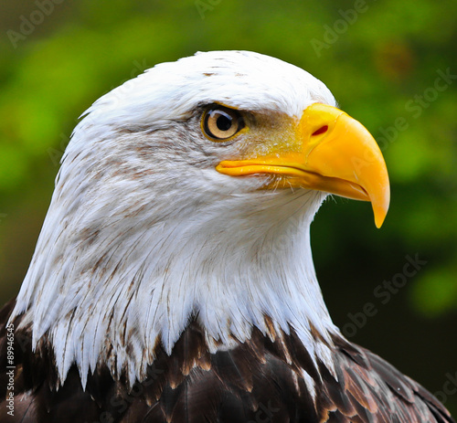 Aluminium Eagle Standing Guard
