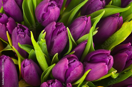 obraz PCV Nature bouquet from purple tulips for use as background.