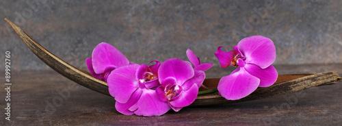 kwiaty-orchidei