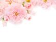Obrazy na płótnie, fototapety, zdjęcia, fotoobrazy drukowane : Pink roses and buds in the corner of the white background