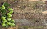 Fresh green hops on a wooden background