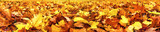 Fototapety Autumn leaves, super wide banner