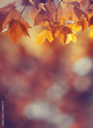 Autumn background Poster