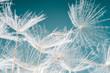 Abflug / Flugschirme der Pustblume beim Start :)