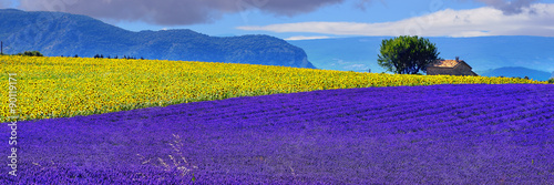 Fotobehang Violet Provence rural landscape