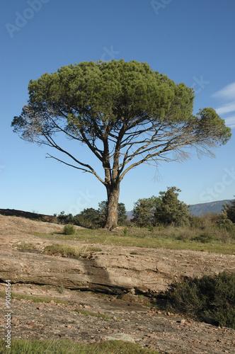 Poster Pin d'Alep, Pinus halepensis, Rochers de porphyre, Site protégé, Massif de l'Est