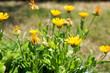 Beautiful small yellow flowers