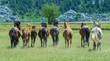 Obrazy na płótnie, fototapety, zdjęcia, fotoobrazy drukowane : vahşi atlar & yılkı atları
