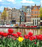 Beautiful landscape with tulips and houses in Amsterdam, Holland - 90227193