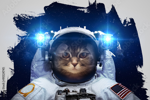 Beautiful cat in outer space. Elements of this image furnished