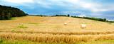 Fototapety  Field of grain.