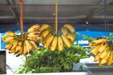 Bananas musa acuminata poster